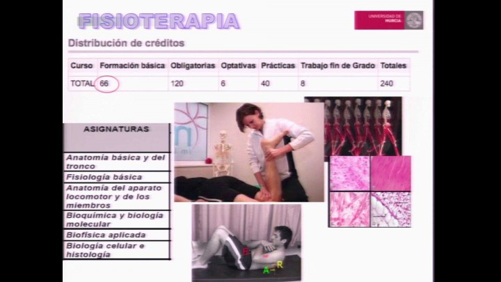 3.- Fisioterapia.