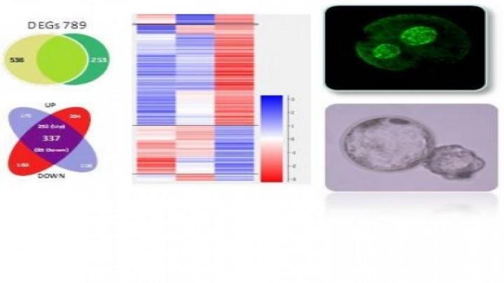 Epigenetic basis of embryo development