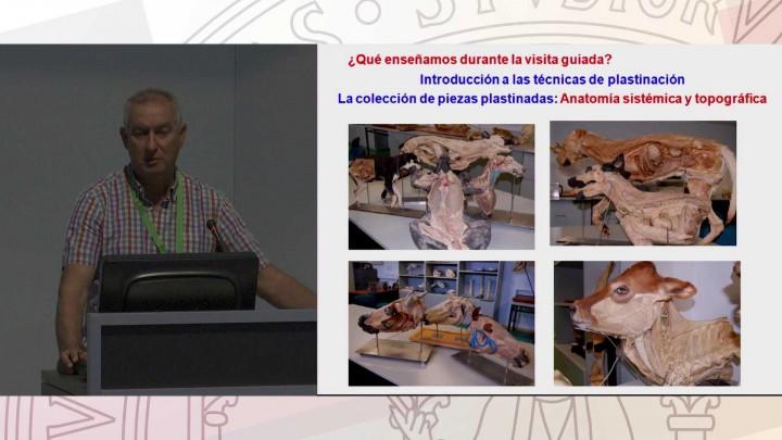 Visitas y Talleres en el Museo Anatómico Veterinario