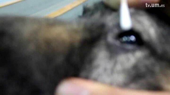 Reflejo corneal
