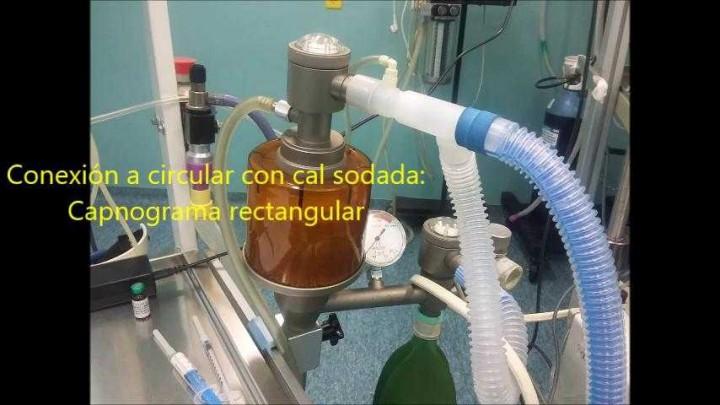 Anestesia General cánido orquidectomía