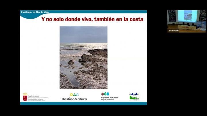 'Posidonia, un mar de vida'
