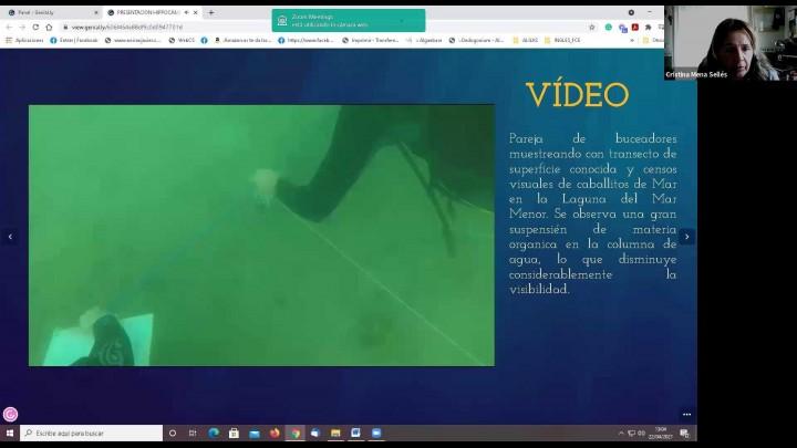 'Situación del caballito de mar en el Mar Menor'