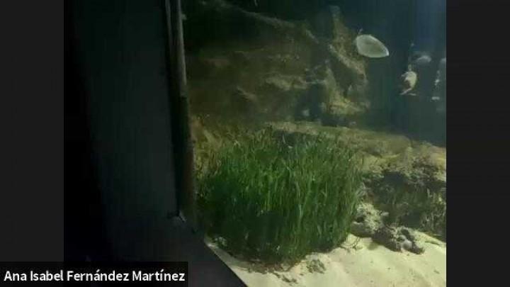 'Visita virtual AquariUM'