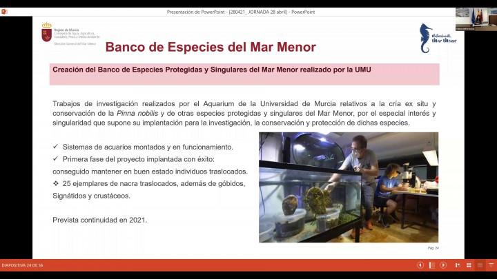 'Actuaciones para la recuperación y protección del Mar Menor a nivel regional'