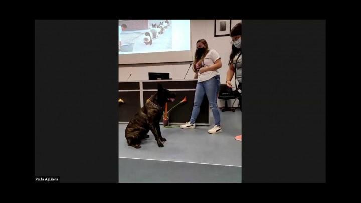 Adiestramiento básico de perros