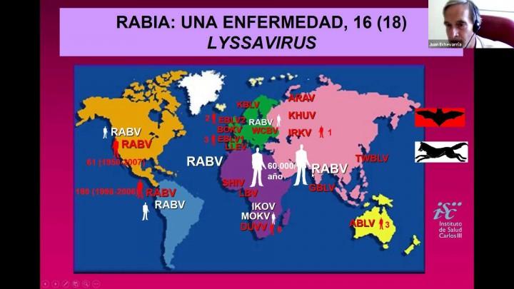 Murciélagos. Importancia de su conservación y relaciones con la COVID-19