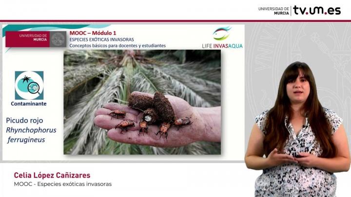 Especies Exóticas Invasoras. Conceptos básicos para docentes y estudiantes.